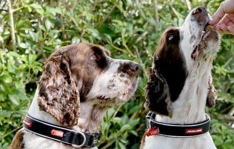 Archie & Dudley web 2017